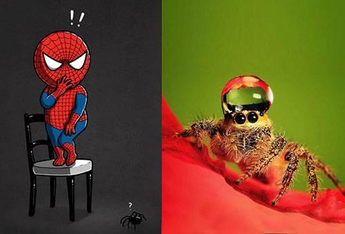 Опасны ли пауки