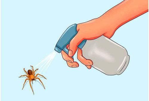 Борьба с пауками
