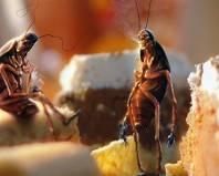 Тараканы в остатках еды