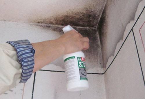 Нанесение фунгицидного спрея на пятно плесени в углу