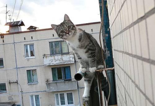 Кот возле балкона