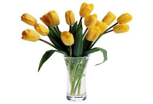 Как сохранить цветы в вазе подольше: подготовка букета, уход, введение подкормки