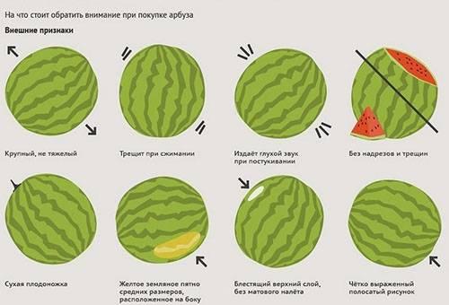 Правила выбора арбуза
