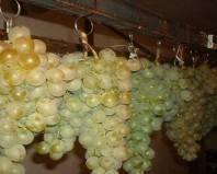 виноград подвешенный