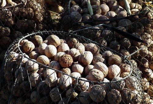 сушка грецких орехов в сетках