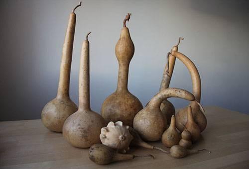 Высушенные декоративные тыквы