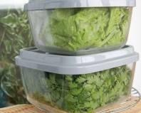 зелень в пластмассовых контейнерах