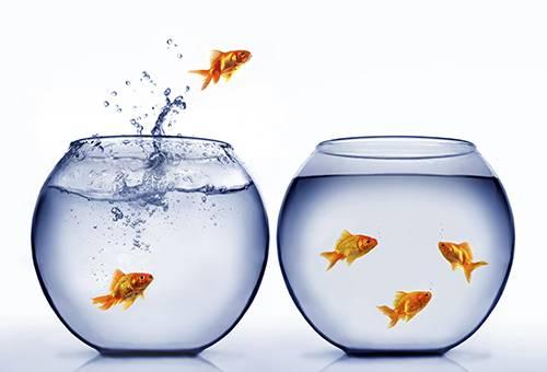 Золотая рыбка выпрыгивает из аквариума