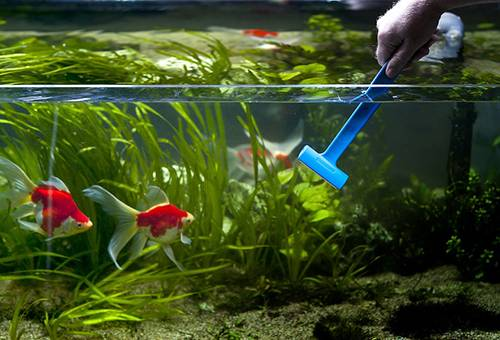Чистка стенок аквариума