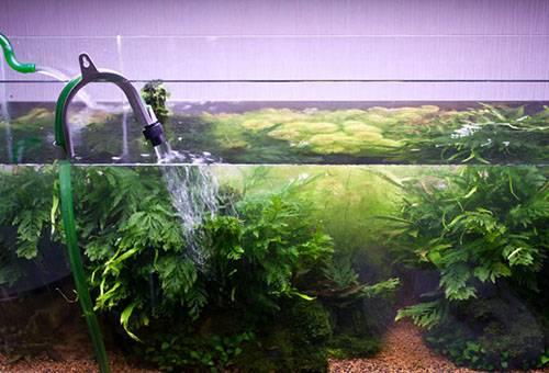 Подмена как способ очищения воды в аквариуме