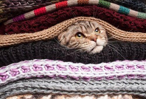 кот выглядывает из одежды