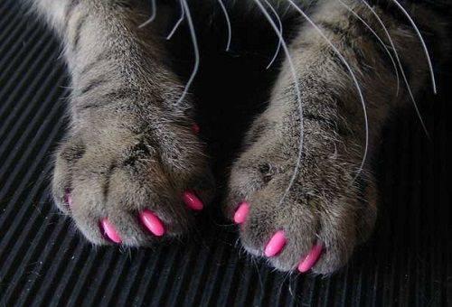 силиконовые насадки у кошки