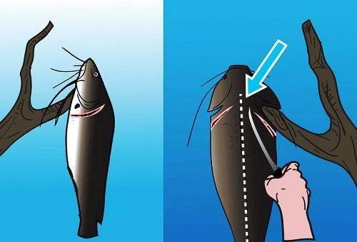 потрошение рыбы