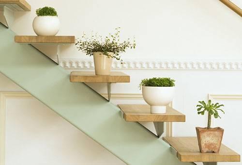 Растения в горшках на лестнице