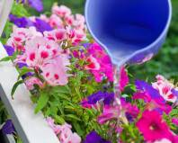 Полив цветов на балконе