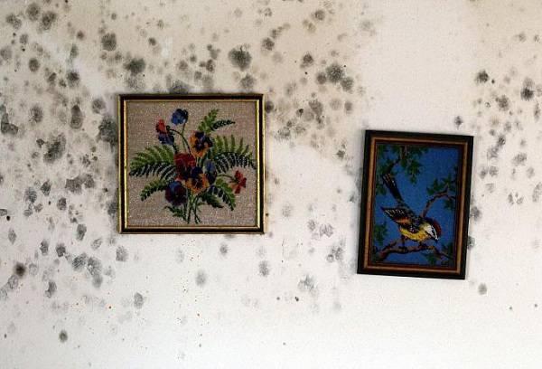 Чем опасна плесень в квартире и как не допустить ее появления?