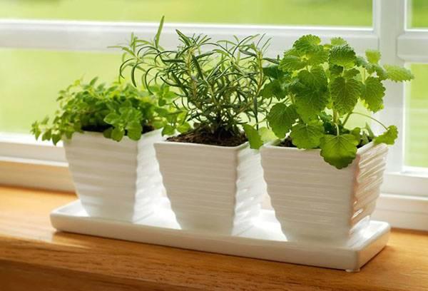 Здоровые комнатные растения