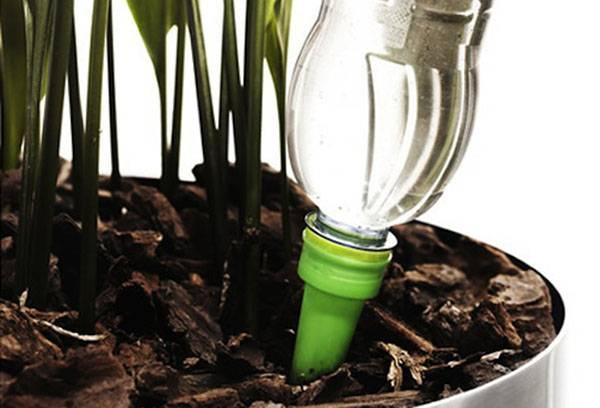Капельный полив растения в горшке