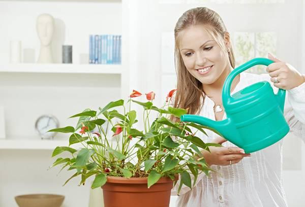 Девушка поливает цветущее растение