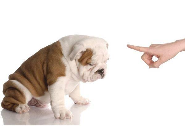 наказание щенка