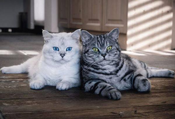 Чем посыпать чтобы кот не гадила
