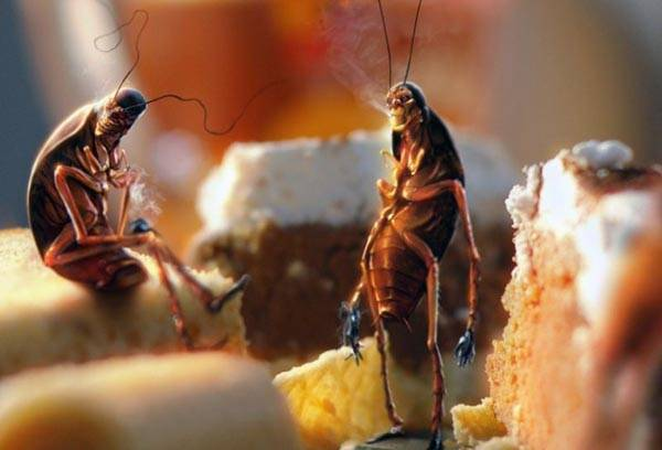 Тараканы в остатках пищи