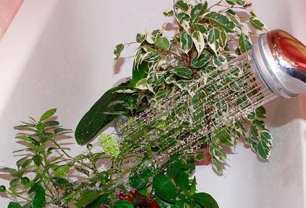 Душ для комнатных растений