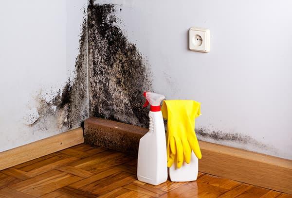 Средство против плесени на стенах