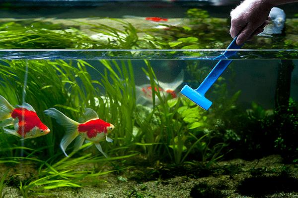 Чистка стенок аквариума скребком