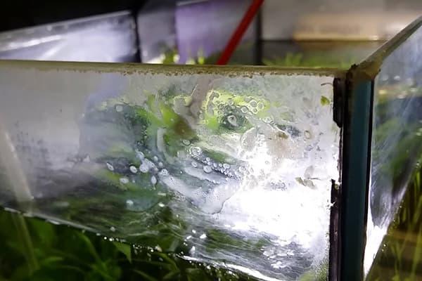 Известковый налет в аквариуме