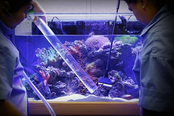 Профессиональная чистка аквариума