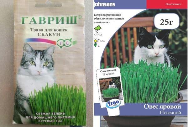 Магазинная трава для кошек