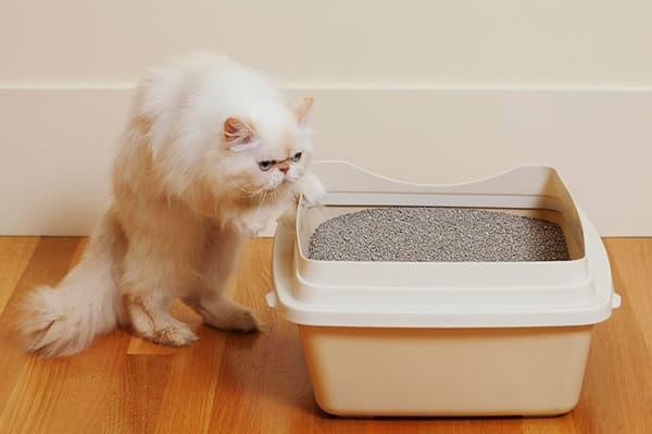 Кот около лотка