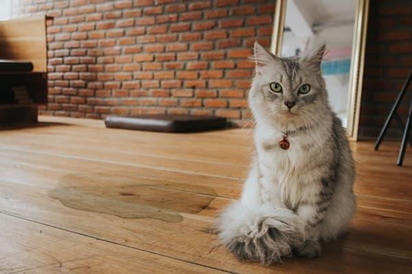 Пятно от кошачьей мочи на деревянном полу