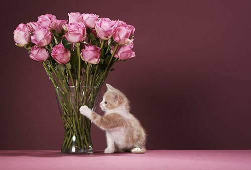 Котенок и букет роз