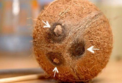 три отверстия в кокосе