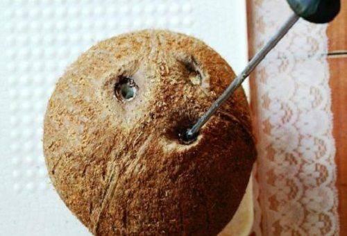 атвертка в отверстиях кокоса