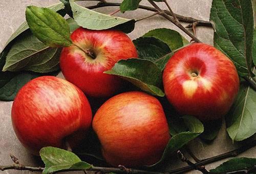 Осенние красные яблоки