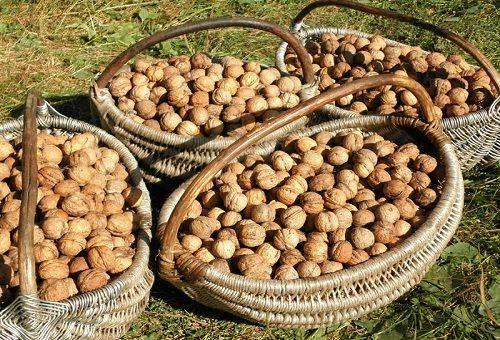 сушка грецких орехов в корзинах