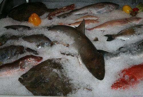 свежая рыба во льду