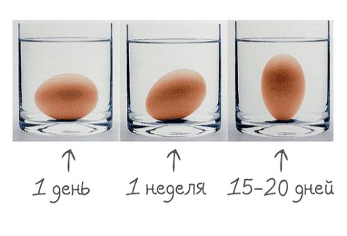 проверка яиц в домашних условиях