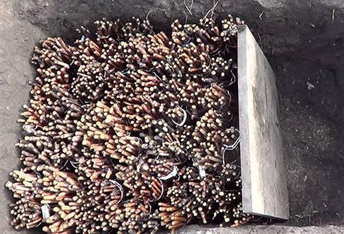 Хранение чубуков - черенков винограда