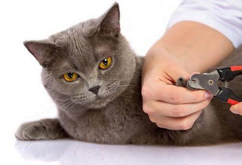 обрезание когтей у кошки