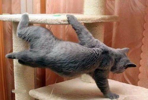 кот играет на когтеточке