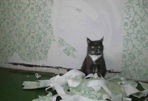 кошка содрала обои