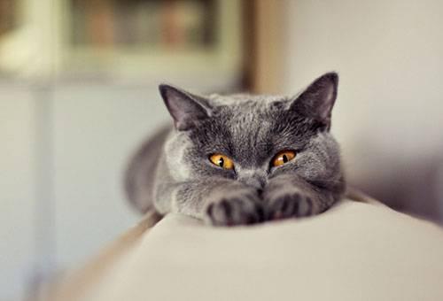 Кот на спинке дивана