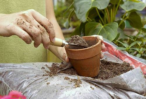 Использование чайной заварки при посадке растения в горшок
