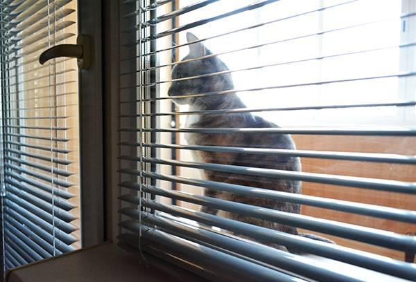 Кот за окном с жалюзи