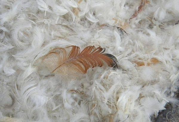 пух и перья