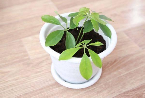 Тропическое растение